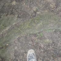 Židovský hřbitov v Lesku - pozor, ať nešlápnete na náhrobek!