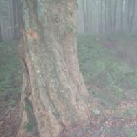 Mlha a déšť v NP Poloniny